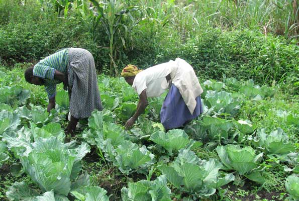 Youth should change attitude towards agriculture